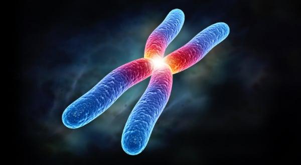 cromosoma 21 humano ilustración