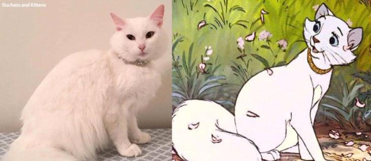 Duquesa, la gata rescatada que dio a luz a los verdaderos aristogatos, Marie, Toulouse y Berlioz; felina blanca con collar