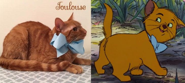 Duquesa, la gata rescatada que dio a luz a los verdaderos aristogatos, Marie, Toulouse y Berlioz; gatito anaranjado con moño azul