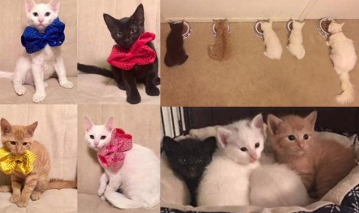 Duquesa, la gata rescatada que dio a luz a los verdaderos aristogatos, Marie, Toulouse y Berlioz; gatitos blanco, negro y anaranjado