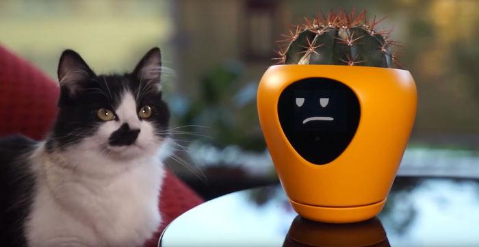 Gato mirando una maceta electronica que interactua a través de emojis