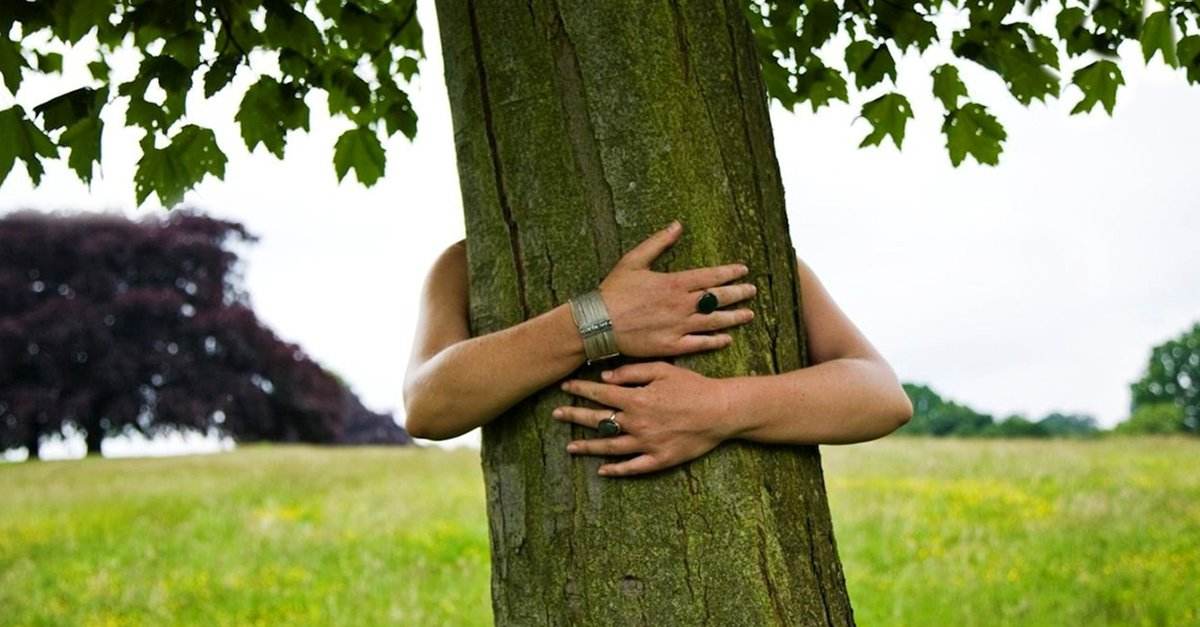 Abrazar árboles tiene impacto positivo sobre la salud, según estudio