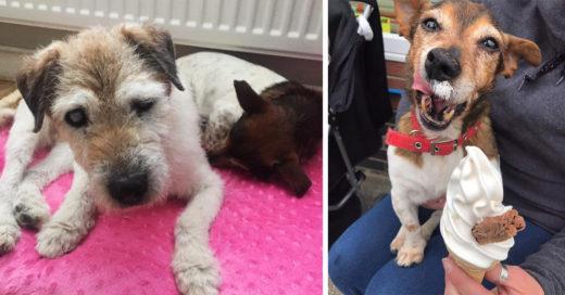 Mujer abre asilo para perros con enfermedades terminales