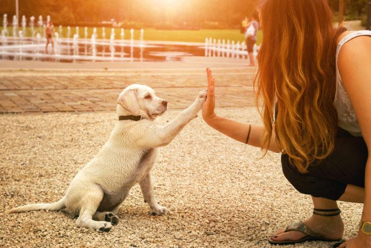 Mujer y perrito blanco uniendo su mano y su pata bajo un atardecer