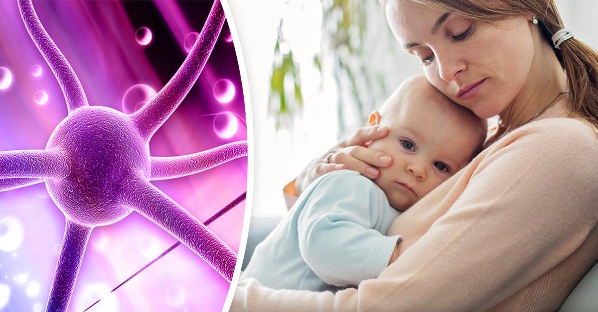 """Investigadores de EU hallan pruebas de la relación entre la oxitocina y el """"instinto maternal"""""""