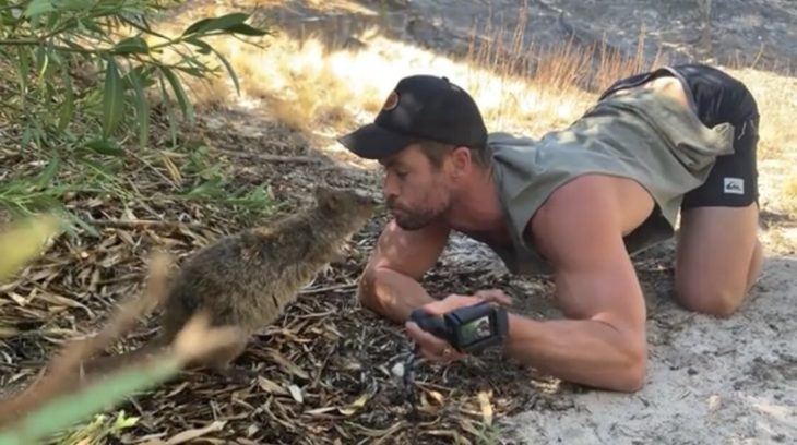 Chris Hemsworth jugando con un quokka