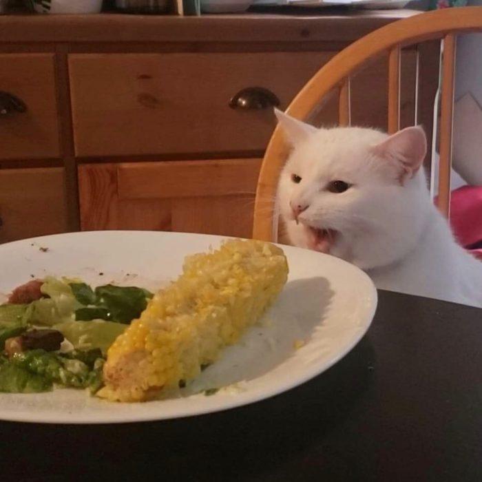 Gato sentado en una silla delante de un plato con elote y vegetales