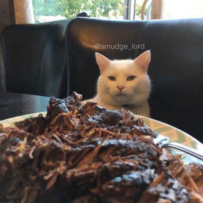 Gato delante de un plato de carne