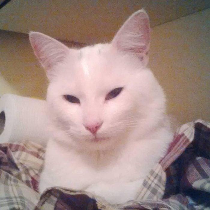 Gato blanco recostado en una cama viendo de reojo a su dueña