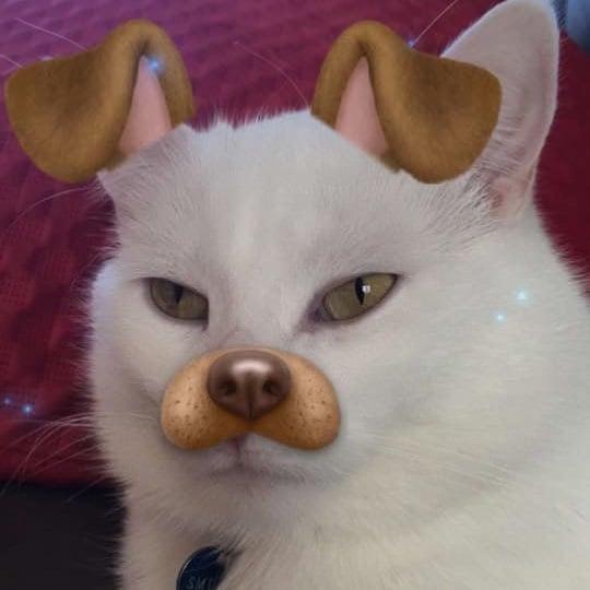 Gatito con un filtro de snapchat de perrito