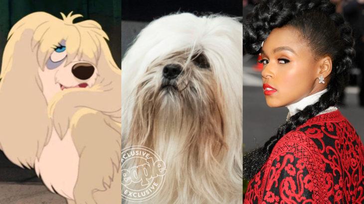 Live action de La Dama y el Vagabundo de Disney; Janelle Monáe como Peg; shitzu blanco de pelo largo