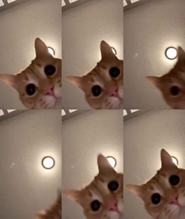 Gatito en un video de tiktok