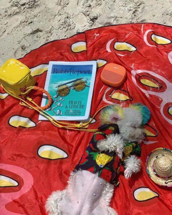 Mujer lleva de viaje a su perro french poodle blanco con orejas teñidas de verde y amarillo; can dormido en la playa con camisa de sandías y piñas