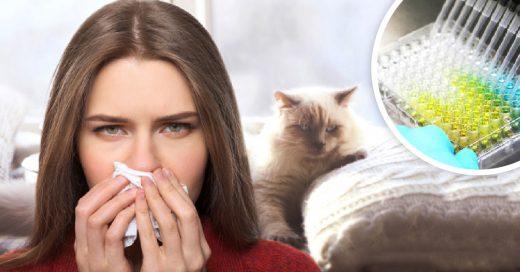¡Buenas noticias para los amantes de los gatos! Crean vacuna para eliminar la alergia