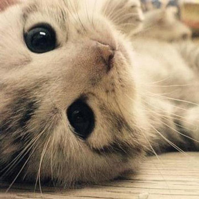 Gatito con ojos tiernos