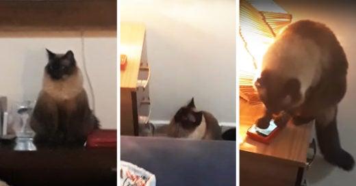 Mujeres llegaban tarde al trabajo porque su gato les apagaba la alarma