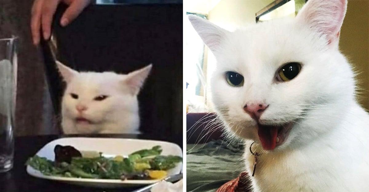 El gatito en la mesa tiene más fotos y es lo más adorable que podrás ver