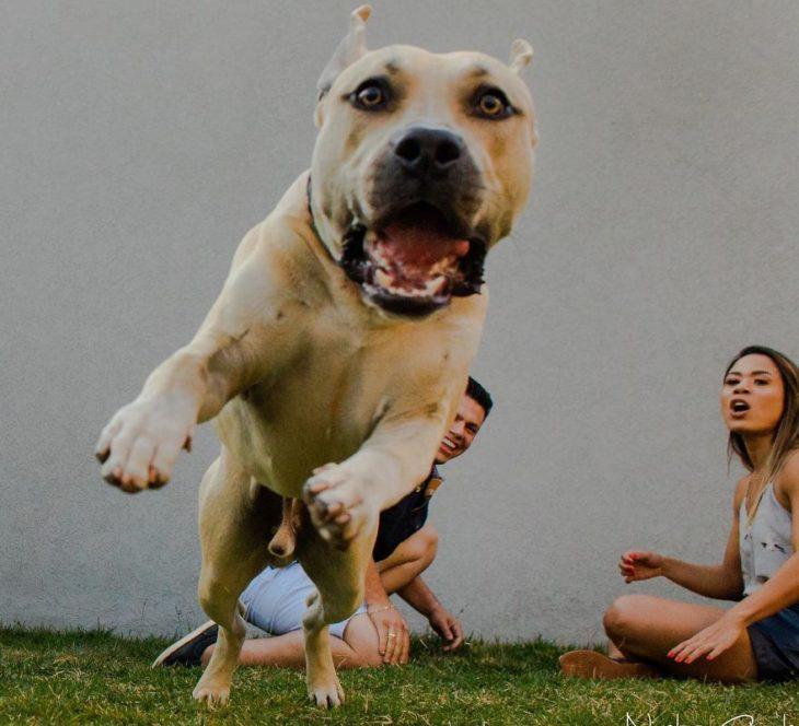 Cachorro de una pareja saltando sobre el fotógrafo en una sesión save the date