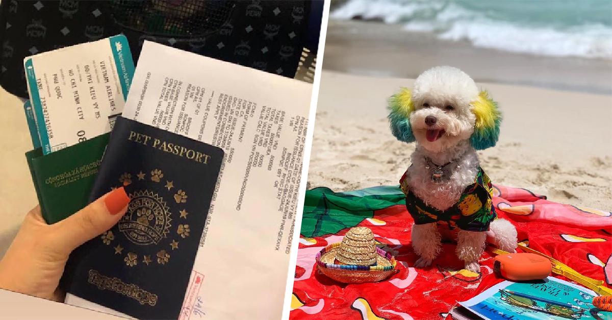 Este lomito se fue de vacaciones a la playa ¡y nosotras lo envidiamos!