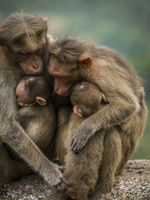 Familia de monos abrazados en la selva