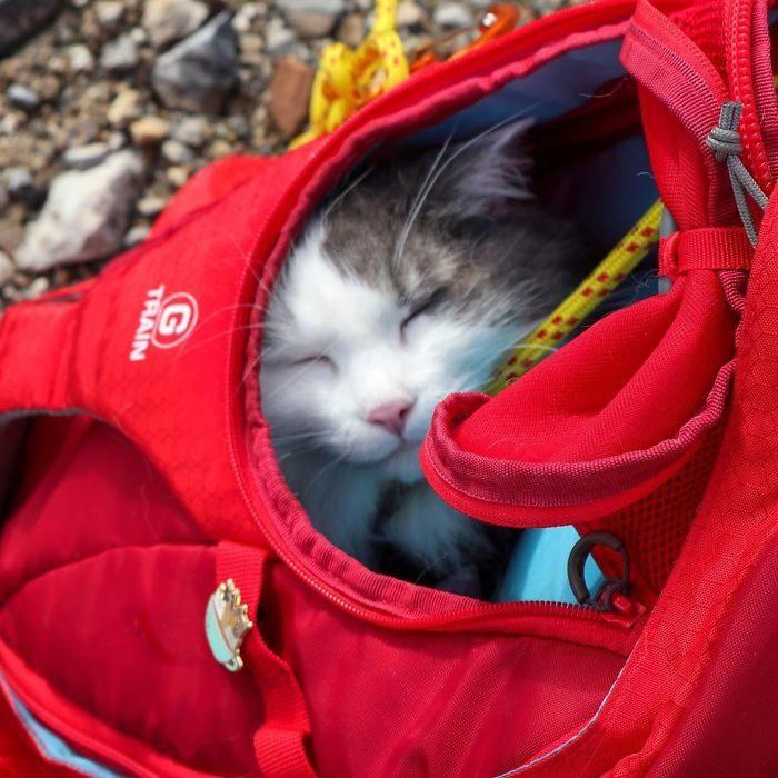 Gary el gato 5
