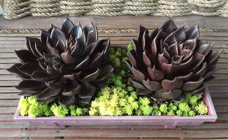 Maceta de madera con pequeñas flores verdes y dos suculenta en tono negro