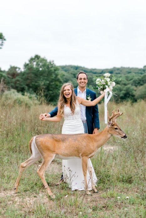 el ciervo se mantiene frente a los novios como posando para la foto