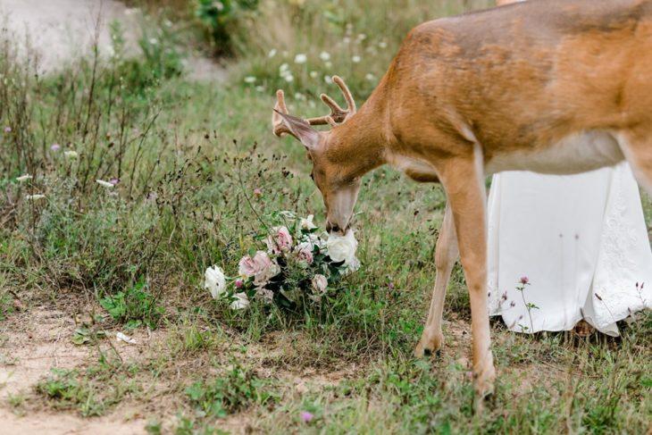 el ramo de novia en el suelo y el ciervo comiéndolo