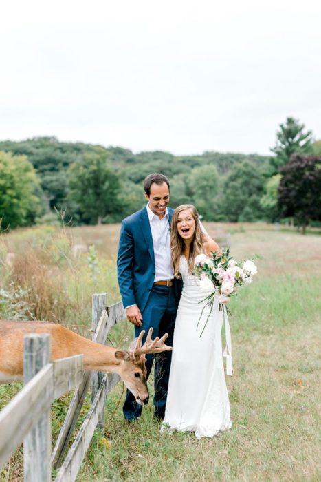 el ciervo asoma a por un cercado y los novios se sorprenden al verlo
