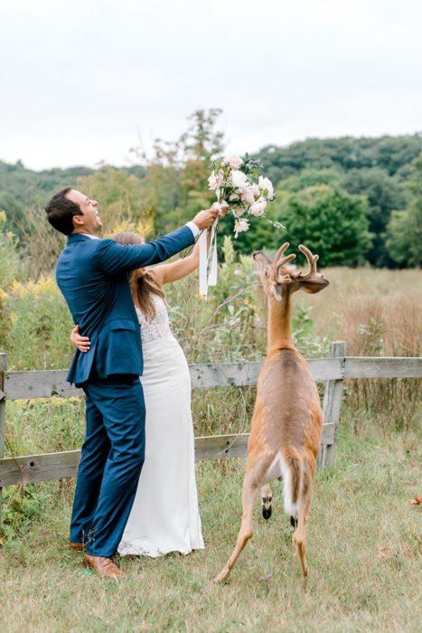 los novios sacan del alcance del ciervo el ramo aunque el animal se estira para ver si puede alcanzarlo