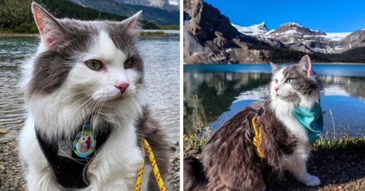 Conoce a Gary, el gatito aventurero