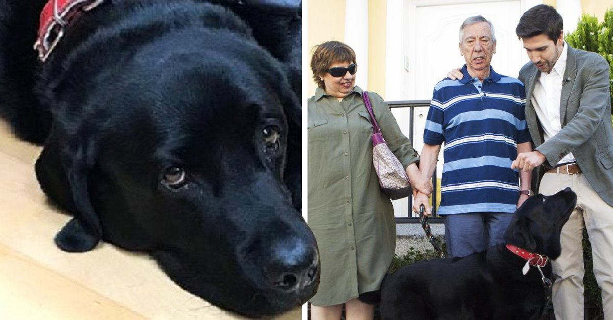 'Lass', la perrita que aprendió a llevar a su dueño enfermo de Alzheimer de regreso a casa