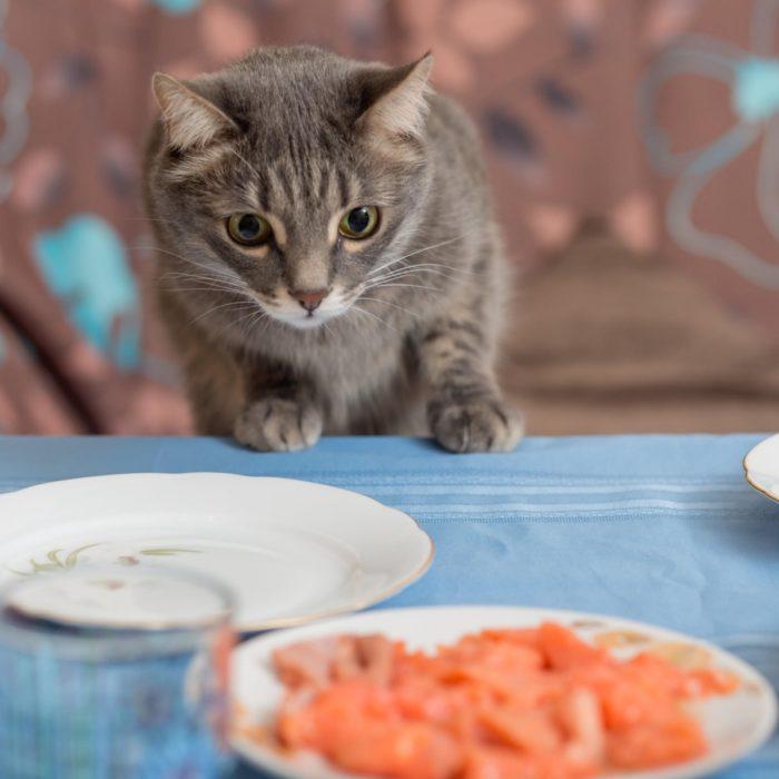 Gato observando comida