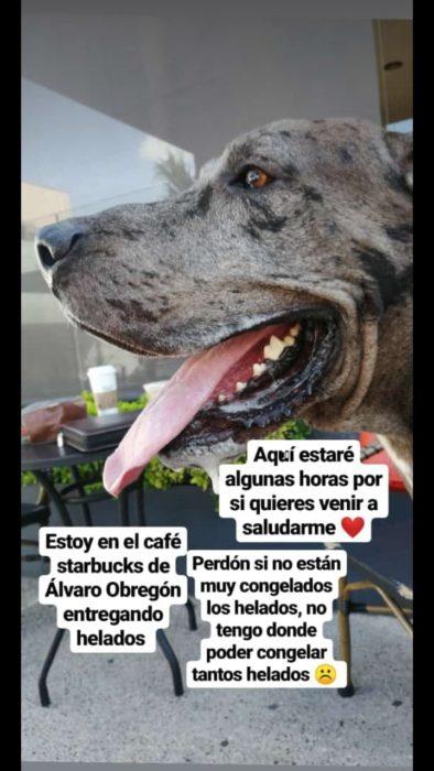Perro gran danés adulto de color gris con manchas negras, vende helados para costear su tratamiento