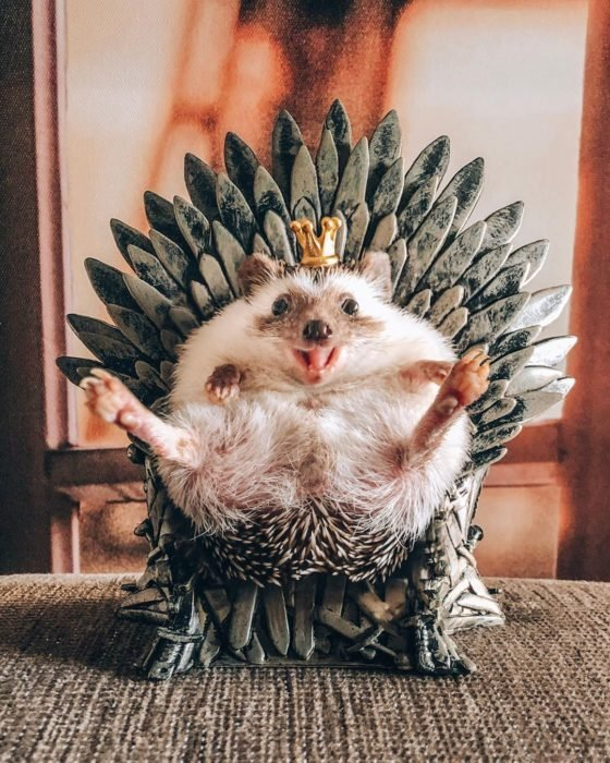 Mr. Pokee Game of Thrones