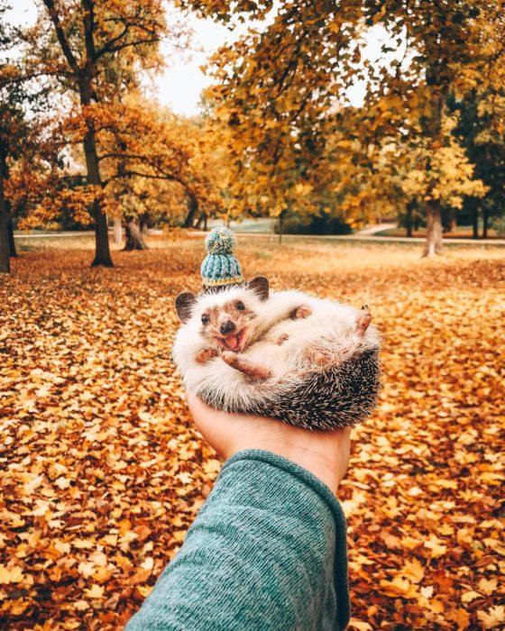 Mr. Pokee otoño