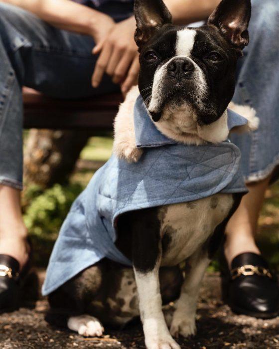Perro con jumper