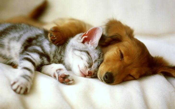 Perro y gato acurrucados durmiendo
