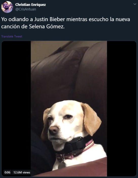 Lose you to love me de Selena Gomez para Justin Bieber se vuelve viral; meme de perro