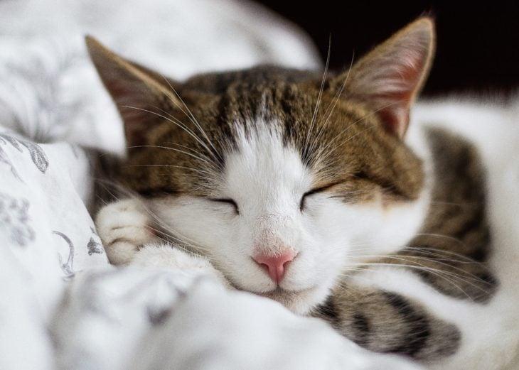 Gatito dormido en su camita