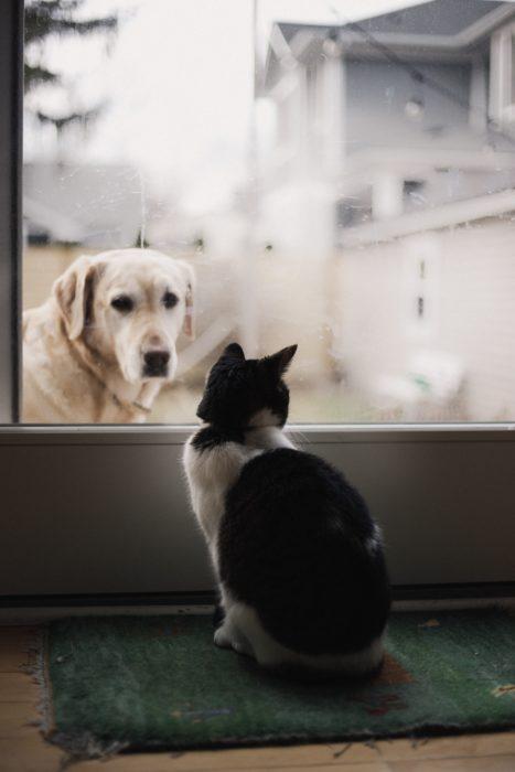 Gatito asomándose a molestar a un perro