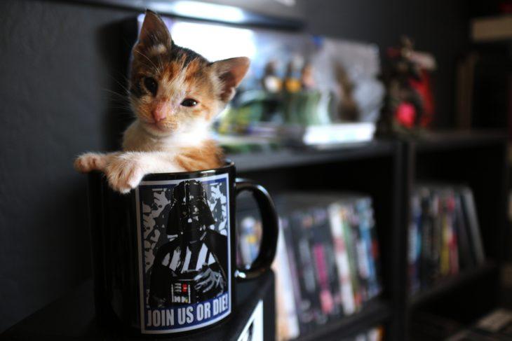 Gatito adentro de una taza