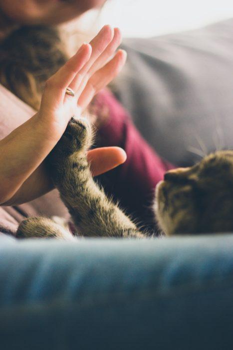Gatito dándole la manita a su dueña