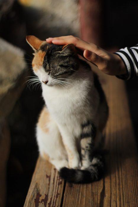 Gato ronroneando