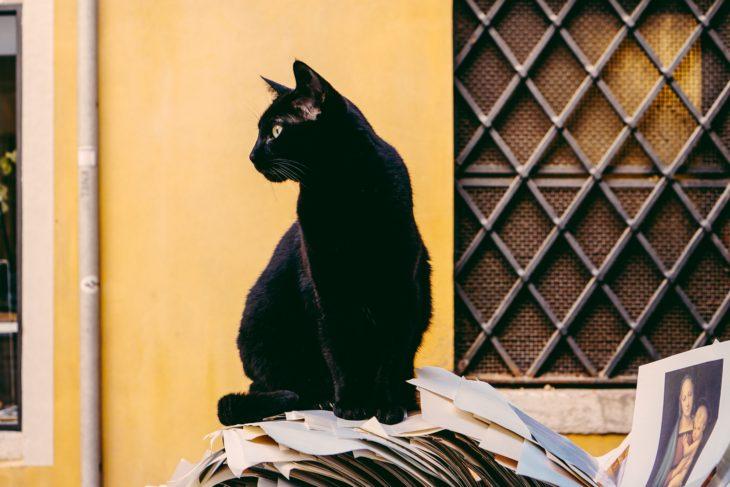Gato negro ignorando