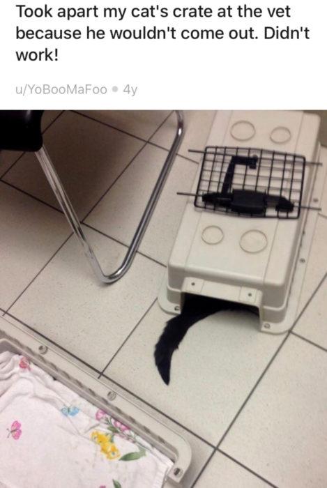 Gato negro tratando de esconderse del veterinario