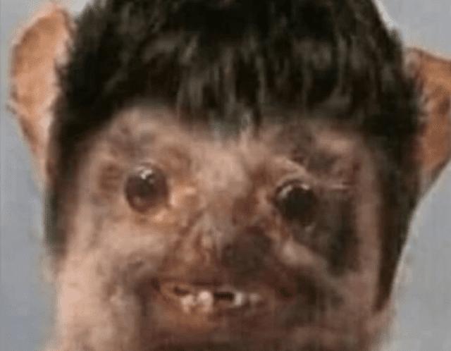 Meme de murciélago: mi celocita
