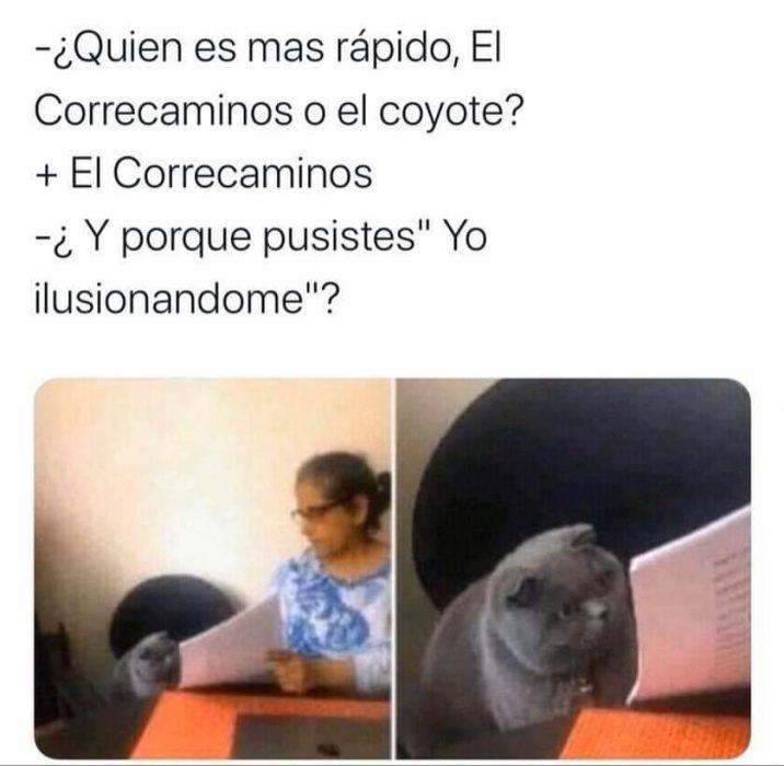 meme del gato que está siendo regañado