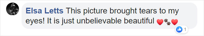 Comentarios en facebook sobre una mujer que hizo sesión de fotos con su mascota