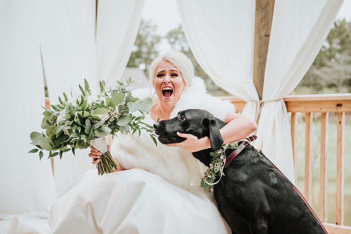 Perrito viendo con amor a su dueña vestida de novia